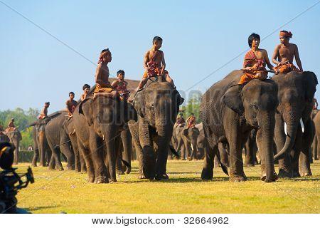 Herd Elephants Walking Towards Camera