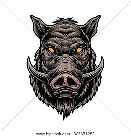 Cruel Wild Boar Colorful Vintage Template On White Background Isolated Vector Illustration