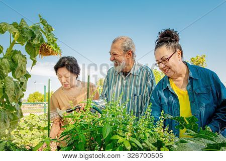 Diverse Seniors Working Together In A Community Garden