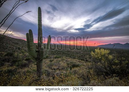 Tucson Arizona Sunset Landscape. Saguaro Cactus, Cholla And Octotillo Cactus In The Sonoran Desert A