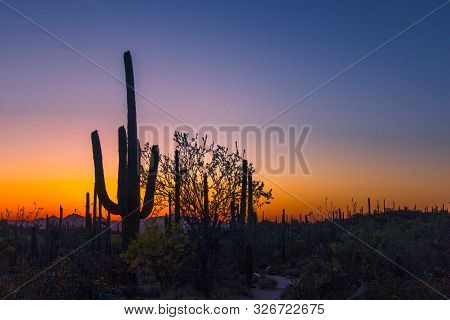 Arizona Sunset Desert. Silhouette Of Large Saguaro Cactus At Sunset In The Sonora Desert Outside Of