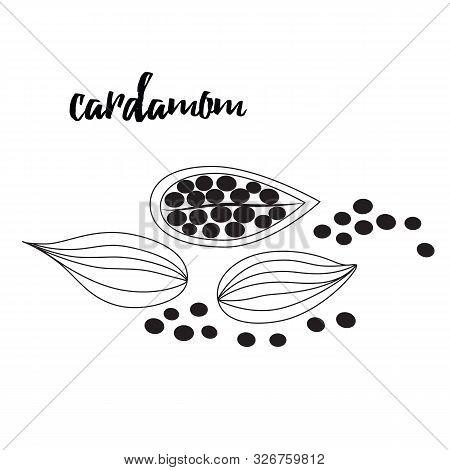 Cardamom Spice. Sketch Style Vector Illustration Of Cardamom. Food Design Element.