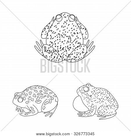 Isolated Object Of Amphibian And Animal Sign. Set Of Amphibian And Nature Stock Vector Illustration.