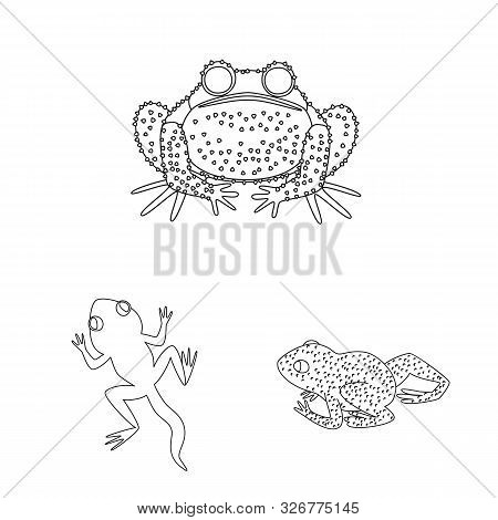 Vector Design Of Amphibian And Animal Sign. Collection Of Amphibian And Nature Stock Vector Illustra