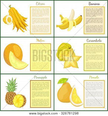 Citron Banana And Melon Posters Set With Text Sample Vector. Yellow Fruits Carambola Star Slice, Pin