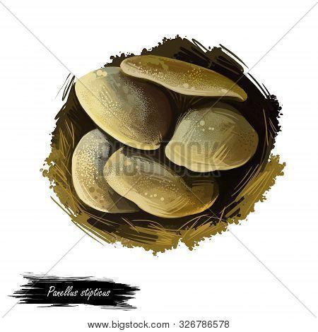 Panellus Stipticus, Bitter Oyster Or Astringent Panus, Luminescent Panellus Or Stiptic Mushroom Clos