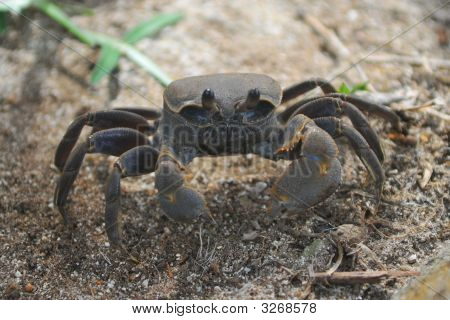 Big crab in the Mahe island Seychelles poster