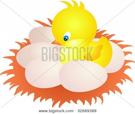 Nest and Chicken vector