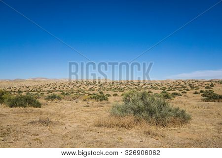 Creosote In Carrizo Plain National Monument