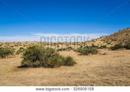 Brush In Flat Mojave Desert