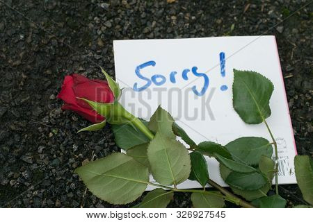 Apology Handwritten Note And Red Rose On Background
