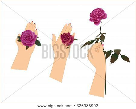 Female Hands With Blooming Roses On A White Background
