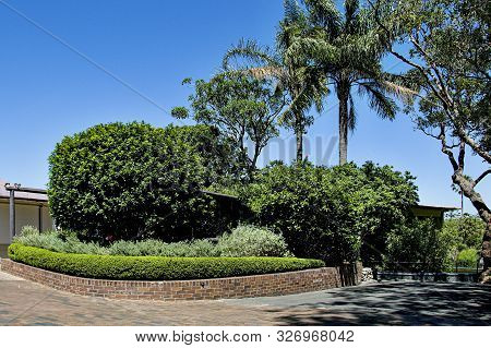 City Park Grounds With Green Palm Trees, Hedge, Shrubs, And Pathway. Sydney, Australia.