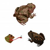 Vector illustration of frog and anuran logo. Collection of frog and animal stock vector illustration. poster