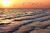 Seascape with a flock of ducks in flight at sunset poster