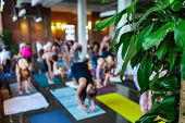A green plant is seen at the front of a gymnasium during a workshop honoring 108 rounds of surya namaskar, a traditional set of yogic poses, with copy-space poster