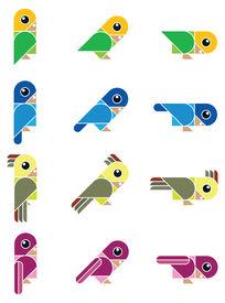birdy, isolated