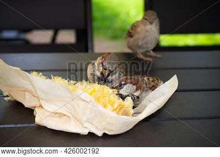 Three Brown Sparrows Pecking Boiled Corn In Paper Package On Wooden Table Outdoor, Close-up