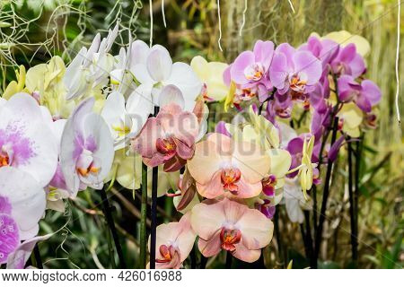 Colorful Orchid Flowers On A Jungle Background