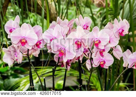 Pink And Purple Orchid Flowers In A Jungle Background