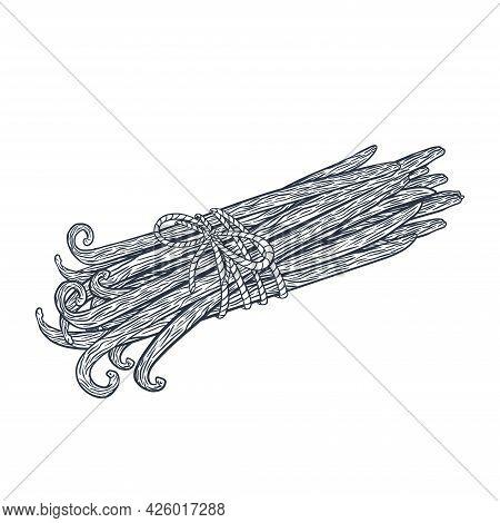 Line Art Vanilla Sticks Tied Bunch Engraved Illustration For Logo, Recipe, Menu, Emblem, Label, Stic