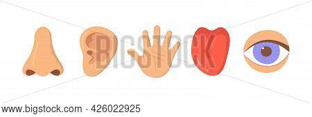 Five Human Senses Organ Set. Nose, Ear, Hand, Tongue, Eye. Sensory Organs Set. See, Hear, Feel, Smel