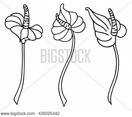 Calla Lily Flower. For Decorating Wallpapers, Walls, Decor, Paintings, Icons, Modern Tattoos, Prints