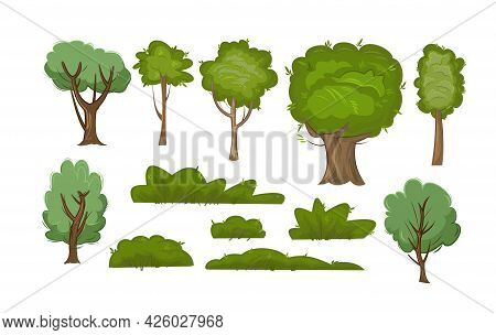 Set Of Summer Trees And Bushes. Adult And Young Green Plants. Objects Are Isolated On A White Backgr