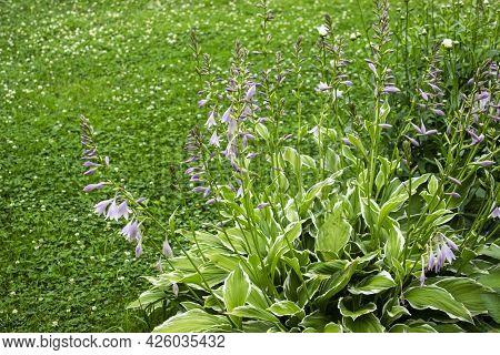 Summer Garden. Garden With Fresh Green Grass, Flowers, Bushes And Trees. Garden Landscape Design Fre