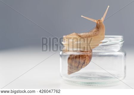 Close-up Of A Snail Crawling On An Empty Glass Jar On A White Background. The Use Of Shellfish In Co