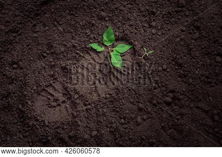 A Young Plant Trampled By An Army Boot, A Soldier's Footprint On Plowed Land, The Concept Of War And