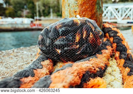 Mussel And Oyster Farm. Nylon Net With Black Mussels.