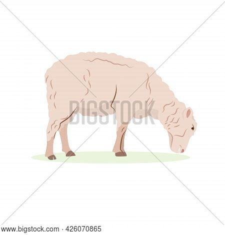 Farm Animals Concept. Detailed Flat Vector Design Of Young Lamb, Side View. Sheep With Beige Wool Co
