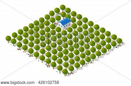 Nature Forest Landscape Of Isometric Illustration With Green Tree, Grass