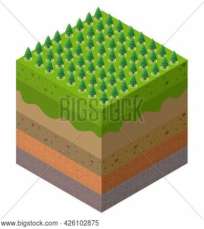 Forest Farm Soil Layers Geological And Underground