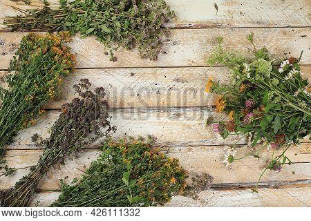 Set Of Medicinal Plants And Wild Herbs, Concept Of Alternative Medicine And Natural Cosmetics, Backg