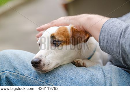 Unrecognizable male owner caressing loyal Jack Russel Terrier dog while resting in park