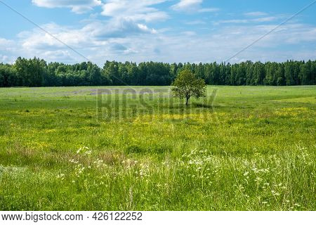 A Lonely Tree In A Large Field With Yellow, Purple And White Flowers.