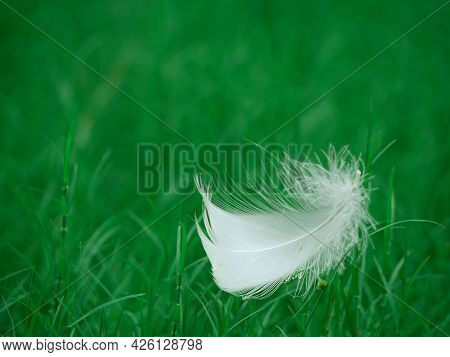 White Bird Wings Isolated On Green Natural Grass Field.