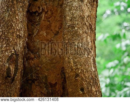Soil On Tree Peal Closeup Presented Illness Of Natural Herbs On Blur Background.