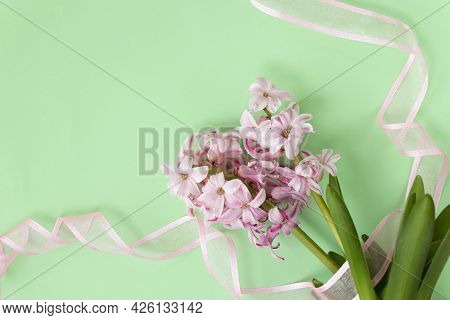 Spring Coming Concept. Pink Hyacinth Flowers On Pastel Green And Pink Ribbons. Spring Or Summer Back