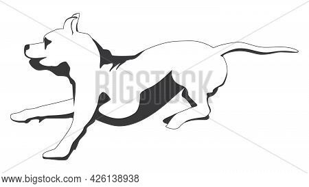 Outline Running Brindle Staffordshire Terrier Or Pitbull Isolated On White. Vector Illustration.
