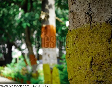 Yellow And White Color Painted Tree Wood Presented At Park Background.