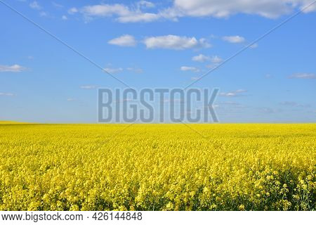 Countryside With Yellow Oilseed Rape Field On Blue Sky Background.