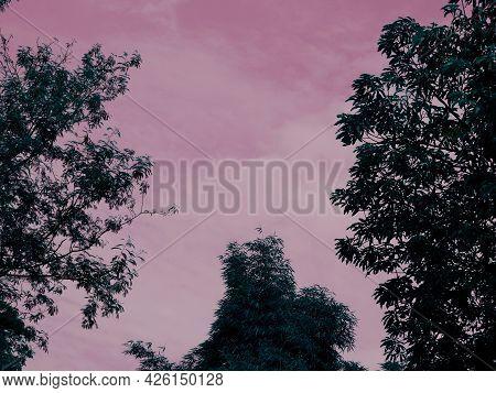 Tree Leaves Sky Center Frame At Evening Time Natural Light.