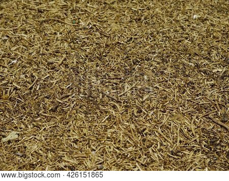 Brown Wood Stick Texture Background Nature View.