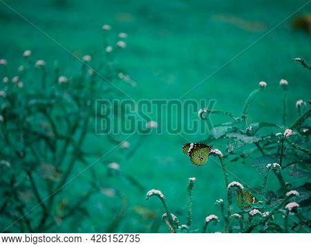 Brown Color Butterfly Insect Seating Flora Plant Dark Green Natural Blur Background.