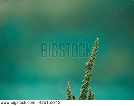 Beetle Insect Climbing On Forest Flower Plant Isolated On Blur Green Background.