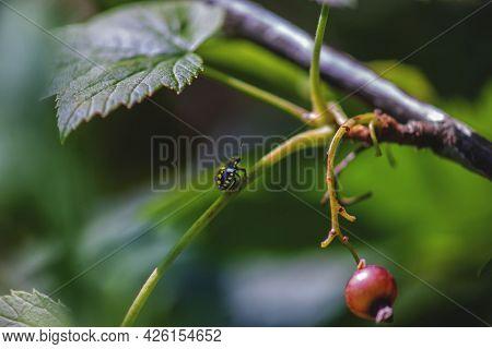 Ladybug On An Unusual Background. Avant-garde Ladybug