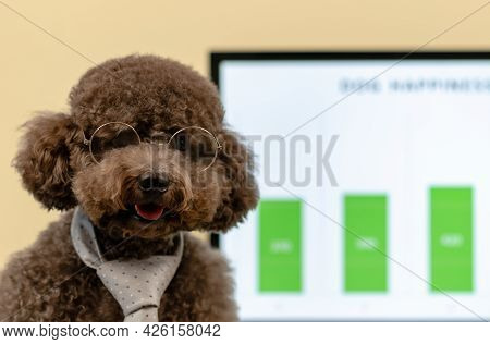 An Adorable Black Toy Poodle Dog Wearing Necktie And Spectacles With Concept That Dog Can Go To Work